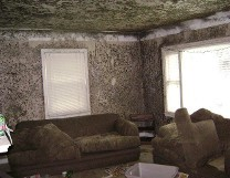 accs-mold-removal-2