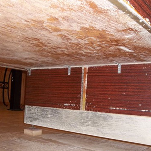 Basement Mold. Accurate Carpet Cleaning Services Mold removal and clean up.