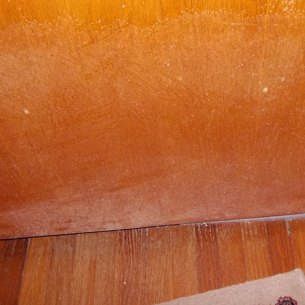 Mold.Accurate Carpet Cleaning Services Mold removal and clean up.